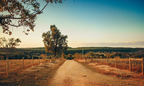 Empty dirt road running through agricultural terrain towards abundant summer forest on sunny day
