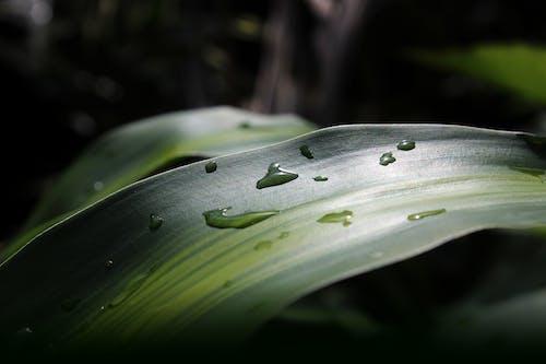Free stock photo of green, macro, nature, plant