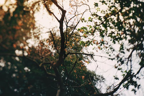 Tree branches in mixed forest in autumn