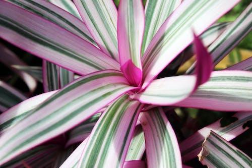 Free stock photo of botany, garden, macro, nature