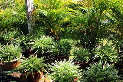 Free stock photo of botany, garden, green, macro