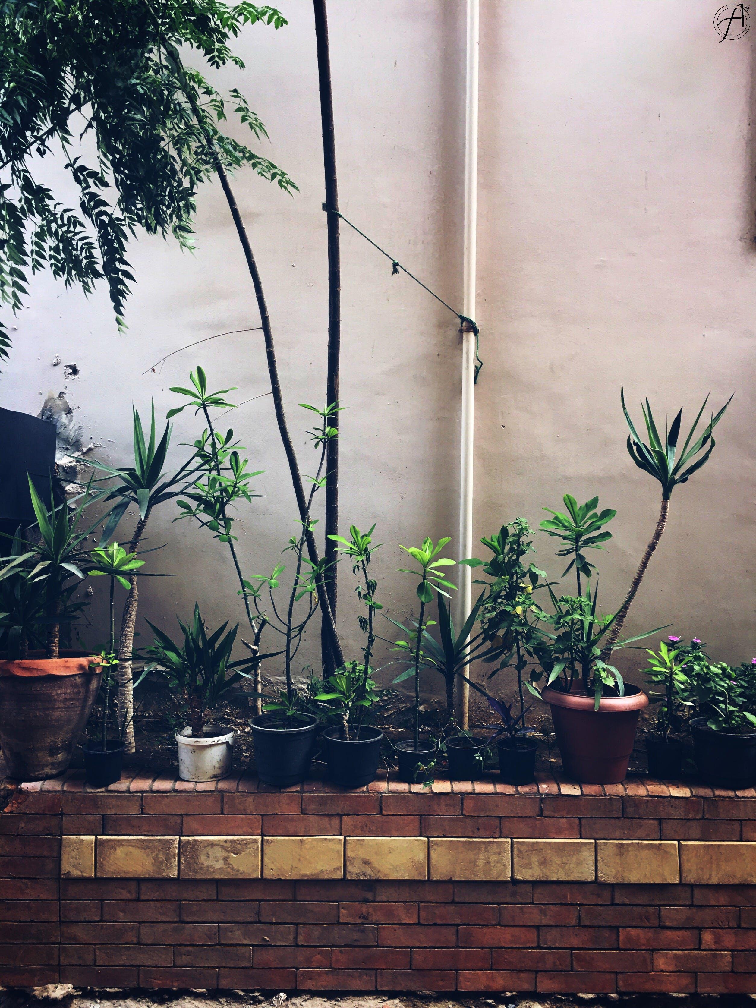 Free stock photo of dark green, Hello, iphone 6s, plants