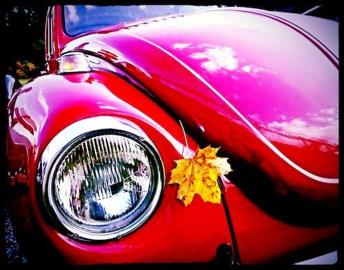Free stock photo of ahornblatt, auto, automobile