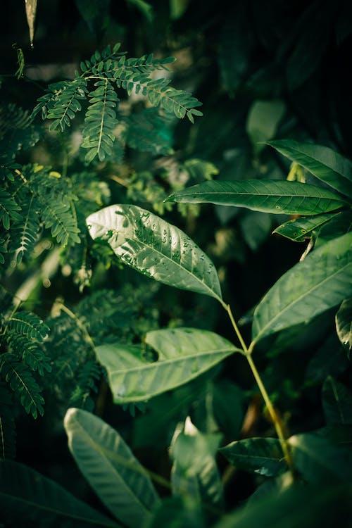 Základová fotografie zdarma na téma barva, bujný, déšť, dřevo