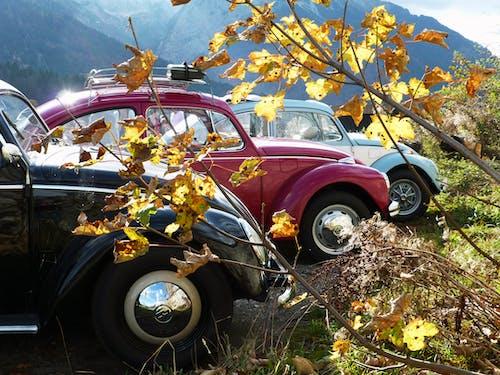 Free stock photo of ausfahrt, auto, autofelgen