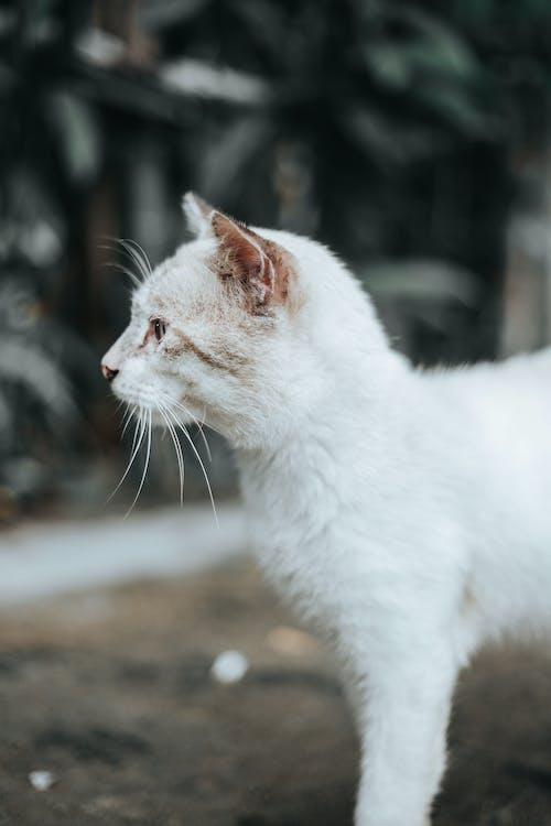 Základová fotografie zdarma na téma dívání, domácí, domácí mazlíček, kočka