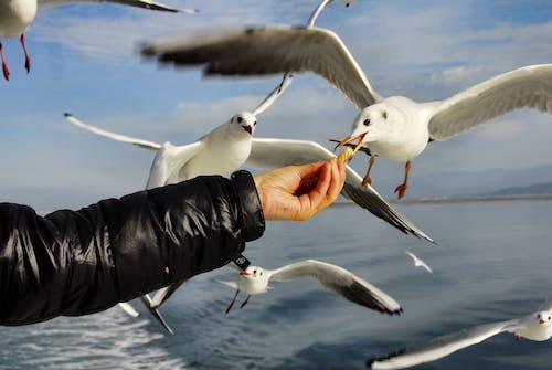 Unrecognizable man feeding seagulls near ocean under sky