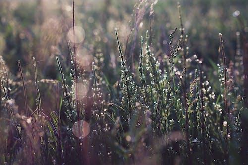 Dew drops on dry plants in field