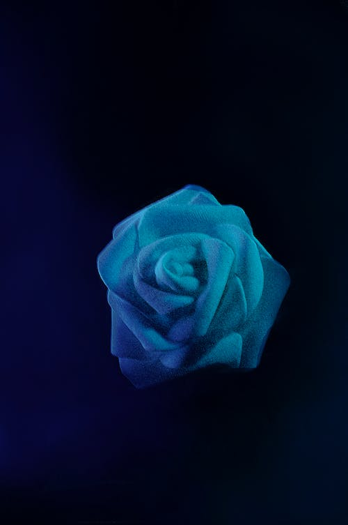 Free stock photo of artificial flowers, beautiful flowers, blue, blue flower