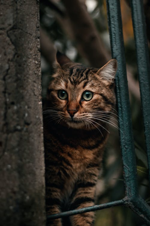 From above of attentive cat with striped fur and green eyes looking away behind metal fence in town