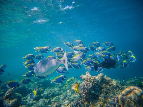 Shoal of bright tropical fish swimming in blue water above reefs in big aquarium