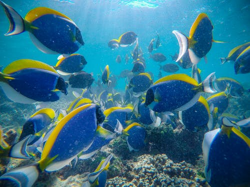 Shoal of colorful exotic fish swimming under water in aquarium