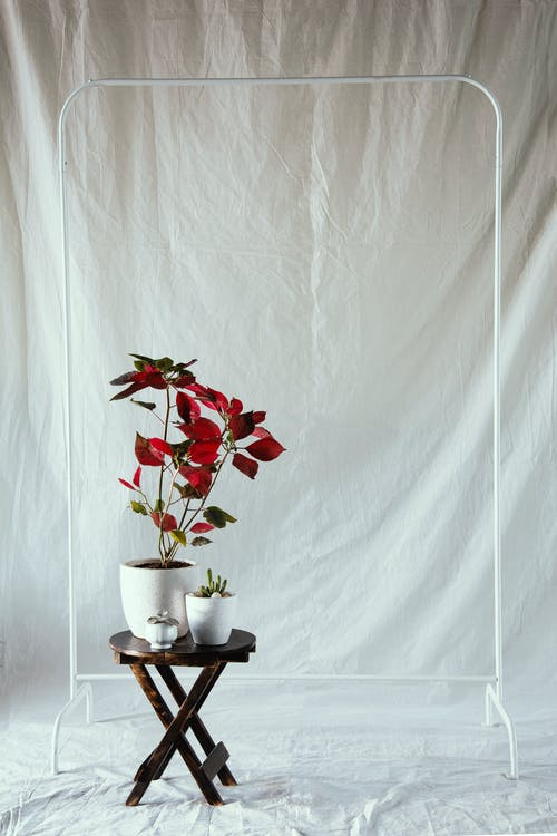 Безкоштовне стокове фото на тему «Асорті, барвистий, білий фон, ботаніка»
