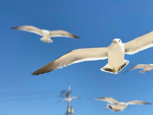 From below of many white seagulls with spread wings soaring in colorful cloudless sky in daylight