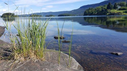 Foto stok gratis air, alam, batu, buluh