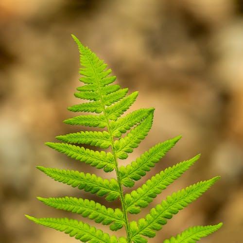 Bright fern leaf in summer garden in daylight