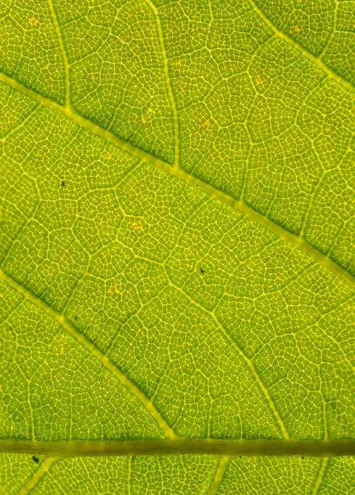Textured backdrop of colorful green plant leaf with ornamental lines