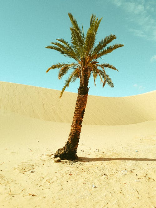 Green Palm Tree on Brown Sand