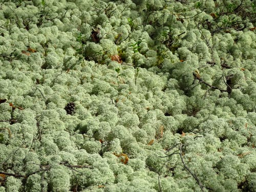Drone view of greenery woodland with bright tree tops and dry twigs in daylight