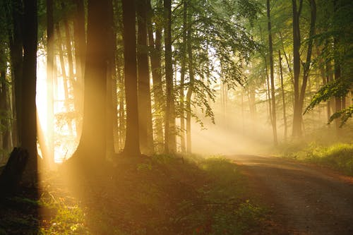 Breathtaking view of glowing sun rays illuminating walkway between overgrown trees at dawn in forest