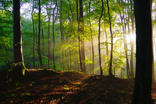 High tree trunks with bright green leaves growing on uneven terrain illuminated by shining sun at dawn