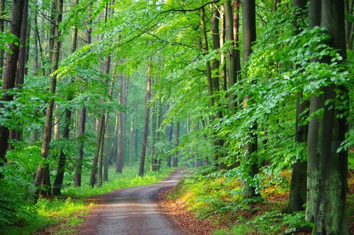 Narrow path between bright greenery woods in summer
