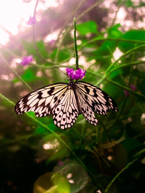Безкоштовне стокове фото на тему «комаха, крила, Метелик, метелик - комаха»