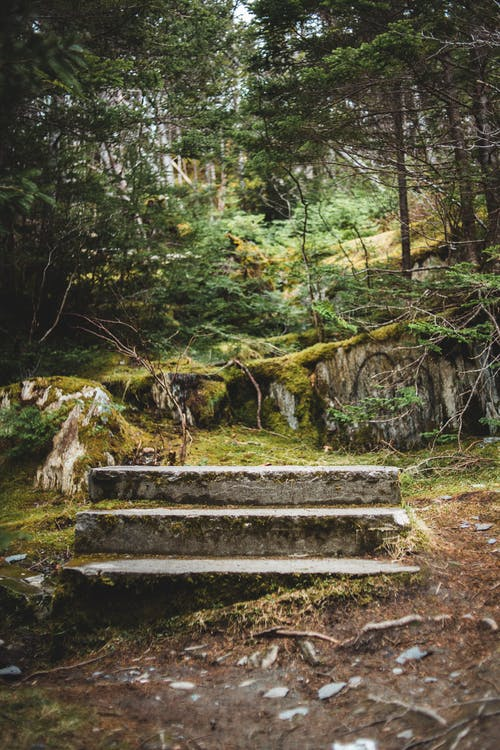 Shabby stone steps located near green forest trees growing on mossy rough terrain