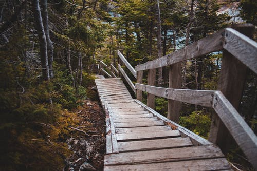 High angle of wooden stairway with railings located in lush autumn forest in morning