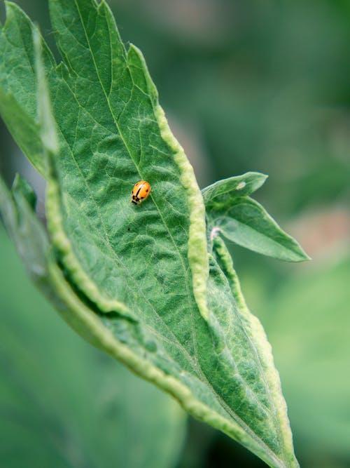 Ladybug on green leaf in garden