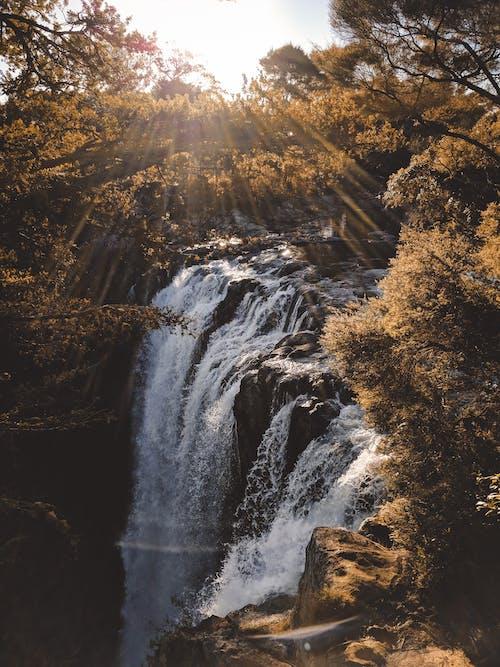 Foto d'estoc gratuïta de arbres, bosc, boscos, cascades