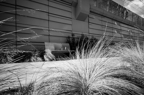 Free stock photo of bench, black and white, monochrome, path