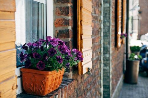 Fotos de stock gratuitas de alféizar de la ventana, colorido, edificio, flores