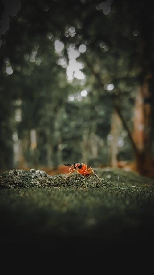 Immagine gratuita di ape, ape da miele, bellezza