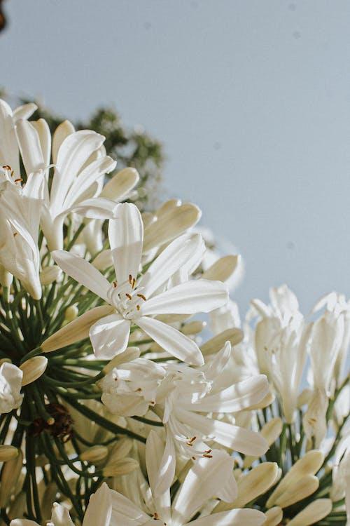 White Flowers Under Blue Sky
