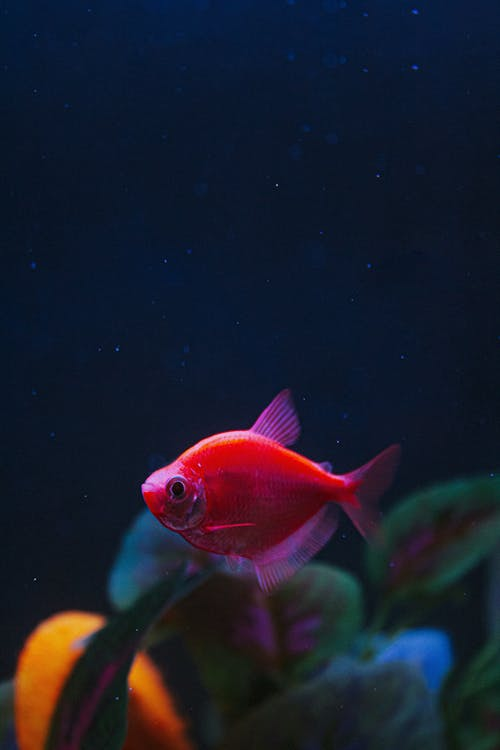 Orange and White Fish in Water