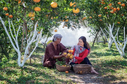 Man And Woman Enjoying The Harvested Fruits