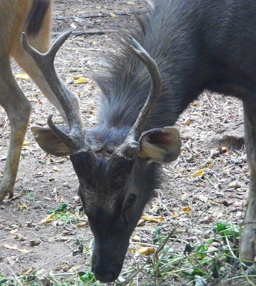 Free stock photo of #deer #deerpark #thenmala #nature #animals