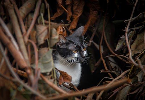 Základová fotografie zdarma na téma černobílá, červená, kočka, listy