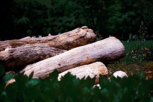 Základová fotografie zdarma na téma fotografie, oheň les, oldtree, palivové dříví