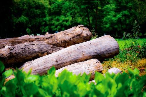 Základová fotografie zdarma na téma fotografie, palivové dříví, příroda pozadí, přírodní krajina