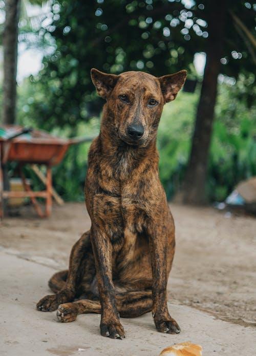 Immagine gratuita di alla ricerca, amicizia, animale, animale domestico