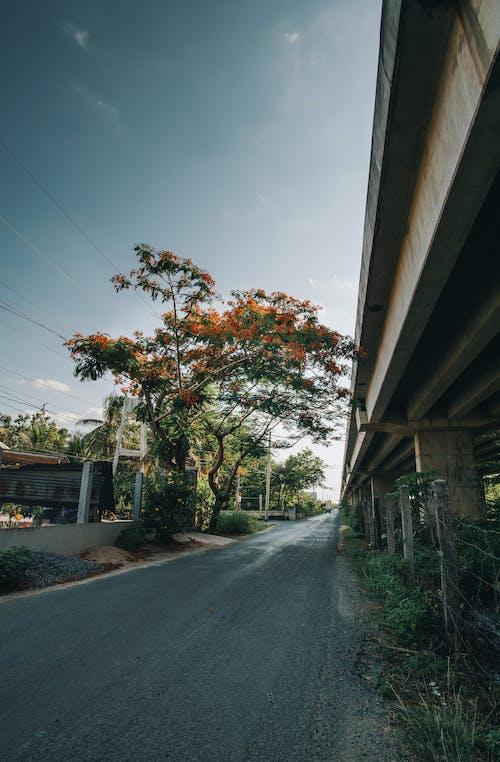 Immagine gratuita di albero, ambiente, architettura, autostrada