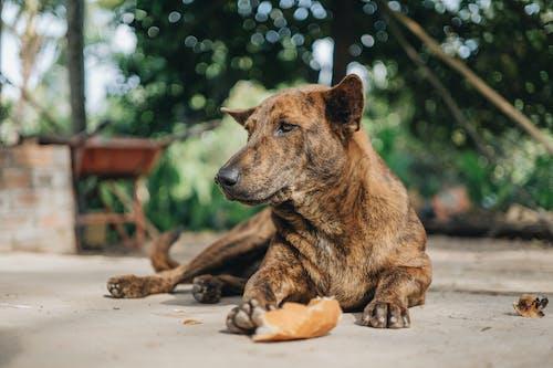 Fotos de stock gratuitas de al aire libre, animal, canino, césped