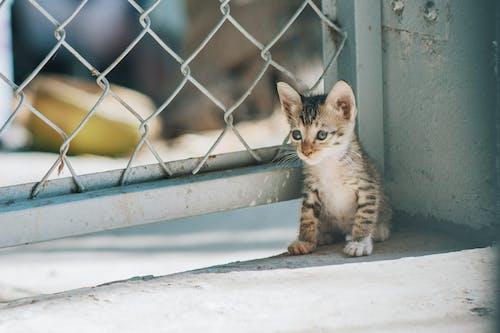 Ảnh lưu trữ miễn phí về Chân dung, chờ đợi, con mèo, con vật