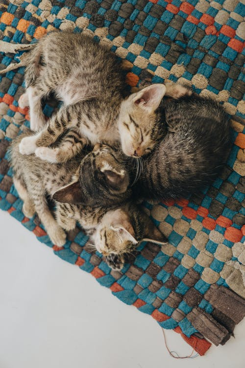 Adorable kittens sleeping together on floor