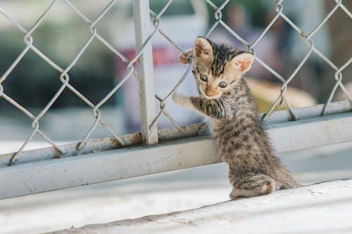 Fotos de stock gratuitas de al aire libre, animal, cerca, Esperar