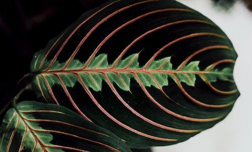 Gratis arkivbilde med abstrakt, blad, blomst, bregne