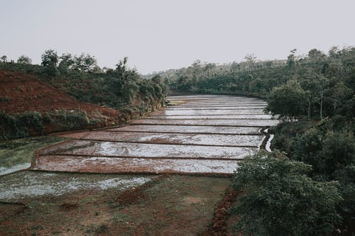 Бесплатное стоковое фото с cảnh rừng, cay cà phê, con ũng cũ