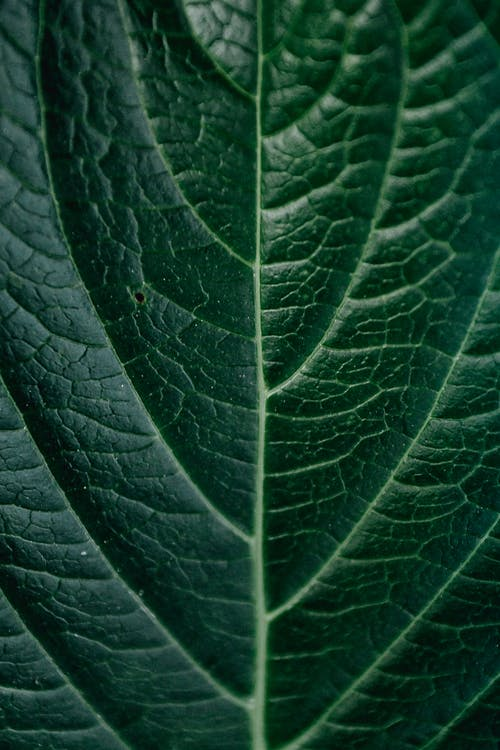 Closeup fresh green leaf texture